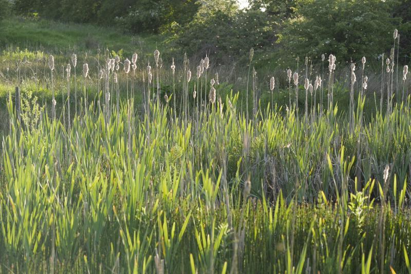 Name:  grassy.jpg Views: 102 Size:  102.3 KB