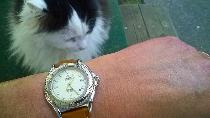 Name:  Zodiac kitty.jpg Views: 61 Size:  51.1 KB