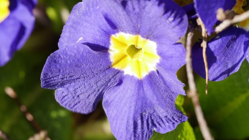 Name:  flower2.jpg Views: 26 Size:  50.6 KB