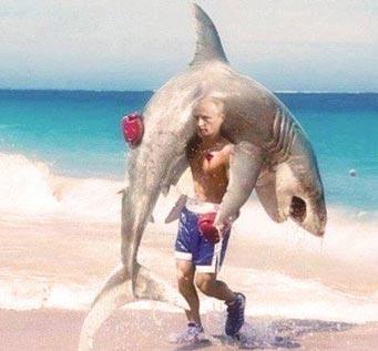Name:  putin-carrying-shark-341x317.jpg Views: 63 Size:  18.6 KB