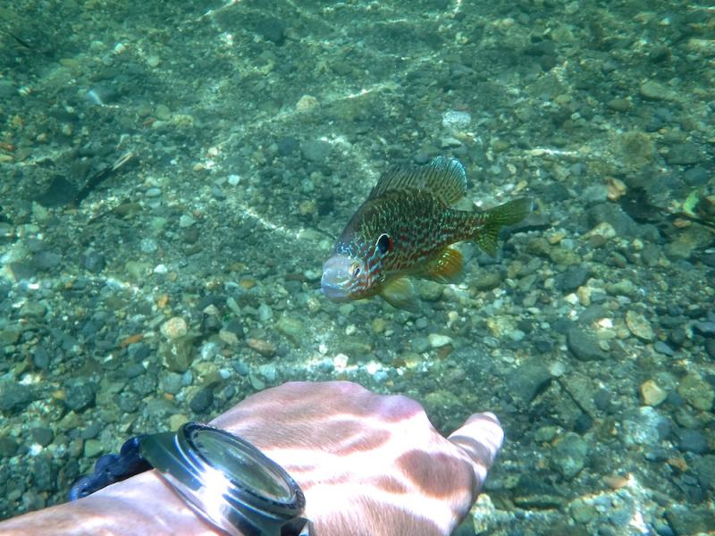 Name:  6139 sunfish2.jpg Views: 38 Size:  95.0 KB