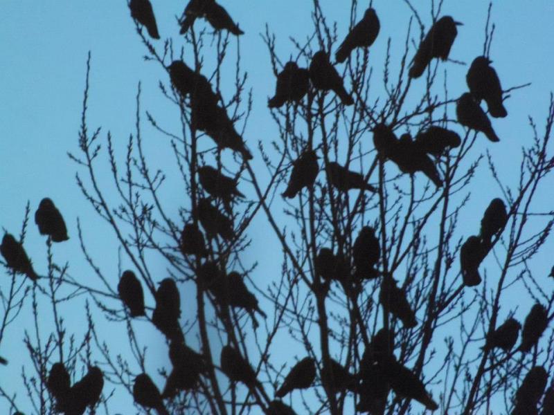 Name:  birds.jpg Views: 158 Size:  78.7 KB