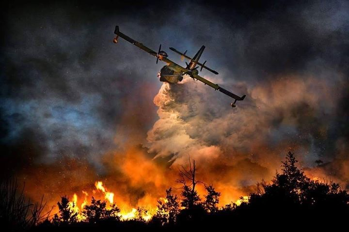 Name:  Forest fires..jpg Views: 60 Size:  44.6 KB