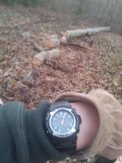 Name:  Gshock tree.jpg