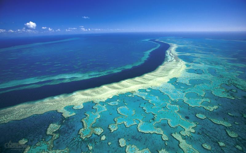 Name:  great-barrier-reef-hardy.jpg Views: 76 Size:  56.3 KB