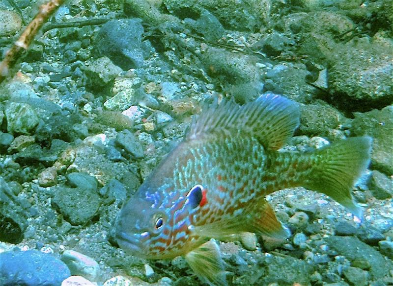 Name:  Sunfish5.jpg Views: 31 Size:  116.4 KB