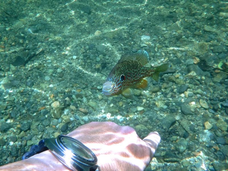 Name:  6139 sunfish2.jpg Views: 31 Size:  95.0 KB