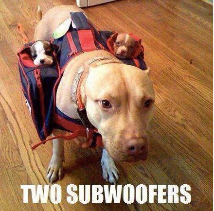 Name:  dog-sub.png Views: 93 Size:  380.4 KB