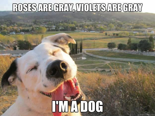 Name:  funny_animal_pictures_13.jpg Views: 92 Size:  49.1 KB