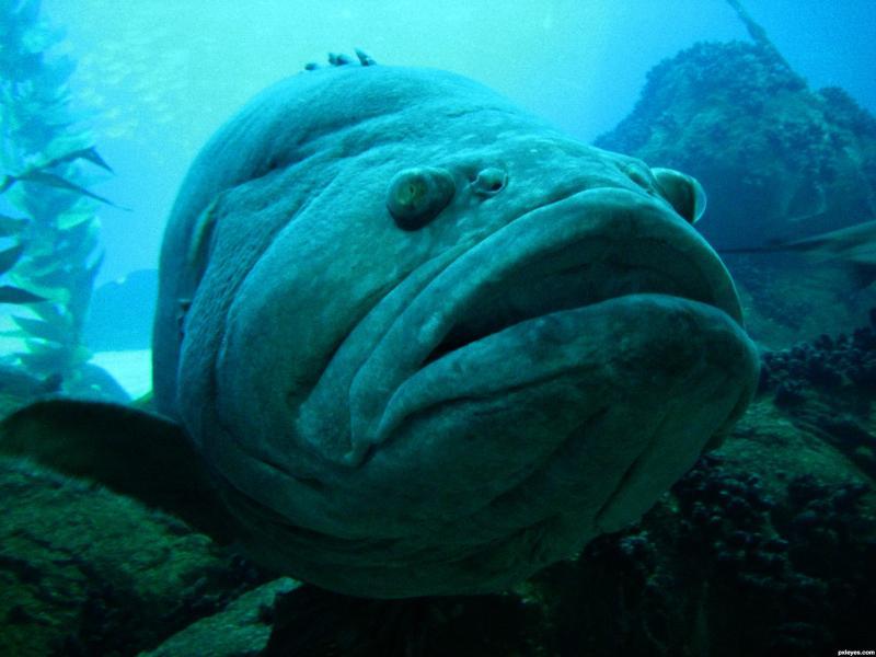 Name:  Big-Fish.jpg Views: 26 Size:  50.4 KB